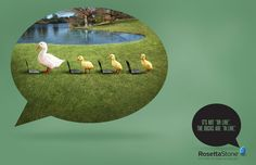 Rosetta Stone : Mistakes, Duck [image] | scaryideas.com