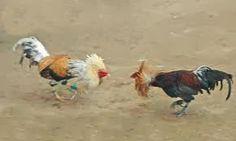 Gallos de Pelea Genética y Herencia : Gallos de Pelea Genetica y Herencia