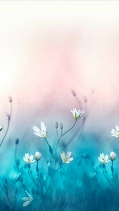 Peaceful and beautiful Flower Backgrounds, Flower Wallpaper, Nature Wallpaper, Wallpaper Backgrounds, Pretty Wallpapers, Jolie Photo, Blue Art, Flowers Nature, Aesthetic Wallpapers