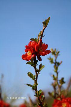 Frühlingsblüher # rote Blüten # Farbenreich