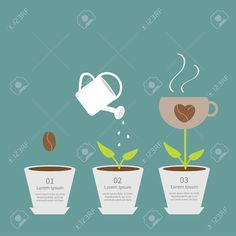 30509478-Coffee-seed-watering-can-cup-plant-in-pot-Growth-concept-Three-steps-Flat-design-infographic-Vector--Stock-Vector.jpg 1,300×1,300 pixels