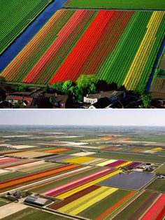 tulips fields (they look like crayons) would be awesome to see from a plane