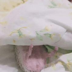 Wild angry hedgehog taking a nap - 9GAG