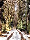 Galerie: Valdštejnská lipová alej | nejstarší dochovaná historická alej v ČR Snow, Plants, Outdoor, Outdoors, Plant, Outdoor Games, The Great Outdoors, Eyes, Planets