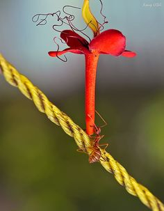 ant with flower