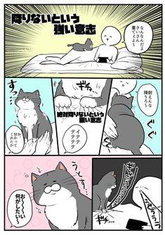 Wonderland, Kawaii, Poses, Manga, Comics, Cats, Funny, Animaux, Gatos