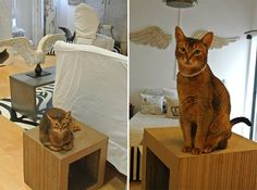 Cat Climbing Shelves, Cat Trees, Catification, San Diego