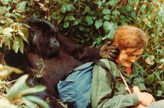 Dian Fossey (16. tammikuuta 1932 – 26. joulukuuta 1985) oli yhdysvaltalainen etologi, joka tuli tunnetuksi gorillalaumojen parissa tekemästään kenttätyöstä.