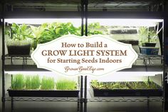 How to assemble a Grow Light System for Starting Seeds Indoors for around $100! Growing transplants from seed is less expensive and there is more variety..