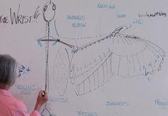 Sandy Scott Art: #140 In the Field:  Bird anatomy and sculpture wor...