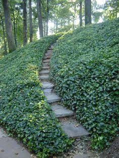 Image Result For Great Ground Cover For A Sun Filled Hill Hill Purple Sloped Garden Easy Landscaping Backyard Landscaping