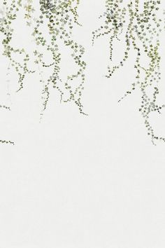 Aralia Mural by Sandberg - Green / White - Mural : Wallpaper Direct