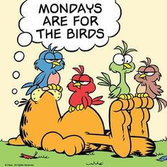 For the birds. Garfield Quotes, Garfield Cartoon, Garfield And Odie, Garfield Comics, Cat Comics, Garfield Monday, Good Morning Funny Pictures, Funny Good Morning Quotes, Funny Quotes