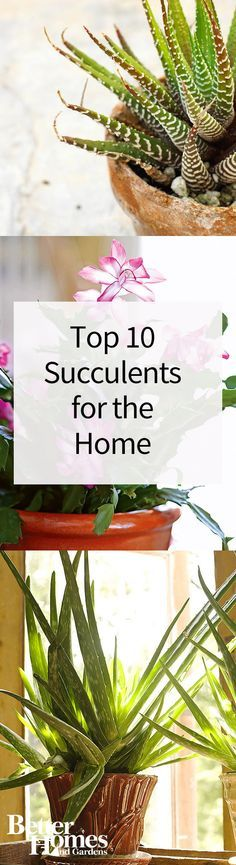 Succulents are some of the best indoor plants and add a calming and decorative element to any room. We've picked the top succulents that are easy to take care of and very low maintenance. Pick up a few of these and place them around your home!