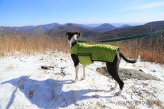 Groundbird Gear blog: Hogcamp Gap Appalachian Trial Central VA. Review on Three Springs Hostel. Hiking with a dog. Made in USA dog gear. www.groundbirdgear.com