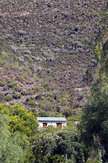 Peace and quiet in Rietfontein Guest Farm in Ladismith (Klein Karoo)