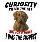 CURIOSITY KILLED THE CAT, But, for a while, I was the suspect.... DACHSHUND DOXIE DOG T-SHIRT #Doxie Darlin' ♥ LOVE