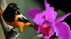 Resultado de imagen para orquidea nacional