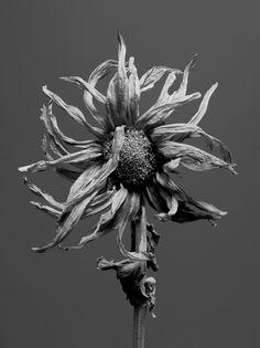 Jon Shireman Photography