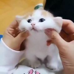 Kittens Cutest Baby, Cute Little Kittens, Cute Baby Cats, Cute Kitten Gif, Cute Little Animals, Cats And Kittens, Kittens And Puppies, Pretty Cats, Beautiful Cats