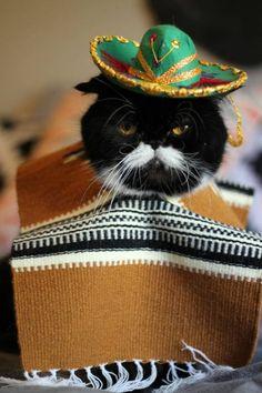 Al gato, no le gusta ni el sombrero ni el poncho.