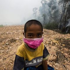 DID YOU KNOW?  Palm oil is produced with forced labor in Malaysia and CHILD LABOR in Indonesia. Besides deforestation and the murder of thousands of animal species, this is another reason why we need to stop supporting companies that source #ConflictPalmOil.  Let us use our wallets to vote, #CutConflictPalmOil from our households and urge big companies to source a more responsible, sustainable oil for our health, for the survival of endangered species, to uphold indigenous rights and for…