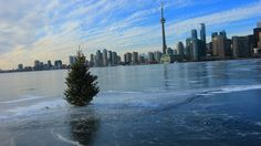 Post with 0 votes and 82 views. So, there's a tree planted in the middle of Lake Ontario. Anyone know the story behind that? Cn Tower, Trees To Plant, San Francisco Skyline, Ontario, New York Skyline, Toronto, Funny Jokes, Canada, Entertaining