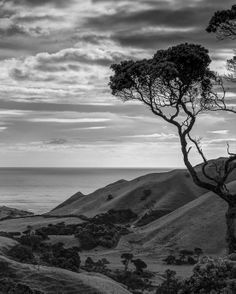 Looking out to the ocean from Awhitu near the Manukau Heads