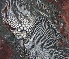 fossilized marine life (possibly crinoids?)