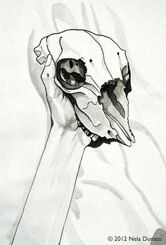 Sheep skull ink drawing