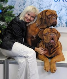 """The breed is commonly referred to as the """"Mastiff"""". Also known as the English Mastiff this giant dog breed gets known for its splendid, good natu Giant Dog Breeds, Giant Dogs, Large Dog Breeds, British Mastiff, English Mastiff, Mastiff Breeds, Mastiff Dogs, I Love Dogs, Cute Dogs"""