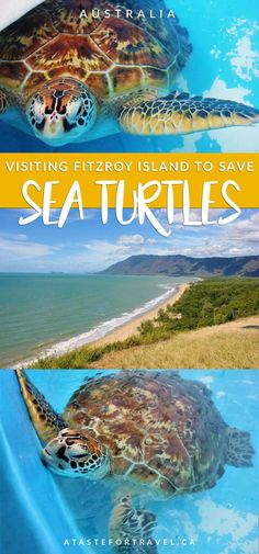An inspiring turtle encounter at the Fitzroy Island Turtle Rehabilitation Center in Australia Visit Sydney, Australia Travel Guide, New Zealand Travel, Queensland Australia, Places To Travel, Travel Destinations, Travel Images, Ultimate Travel, Outdoor Travel