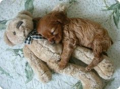 Puppies AND teddies? Cute overload! :)