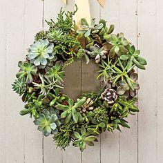 Succulent Wreath | This sweet living succulent wreath is eye candy indeed. Display it as a centerpiece, tie it to the back of a chair, or hang it on an interior wall. Mix and match your favorite succulents for great texture.
