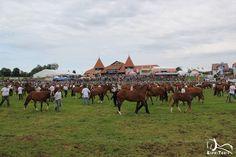 Marché-Concours Année 2014 Horses, Animals, Walking, Pageants, Horse, Animales, Animaux, Animal Memes, Animal