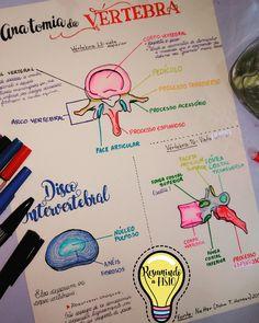 Estudando a Anatomia da vértebra desenhando!