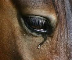 b7b4ffe15951 PLEASE SIGN  amp  SHARE THIS Petition · STOP  HORSE SLAUGHTER · Change.org