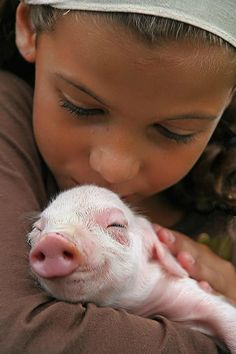 This is so sweet. Pigs deserve to live out a life of contentment, not to be killed for someone's dinner. Loving a pig, cow, horse, goat, sheep, chicken, rabbit, turkey, or goose is no different than loving your dog or cat.