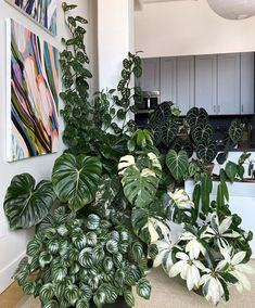 Indoor Vertical Gardening Tips and Ideas Organic gardening isn't always about food to eat. Some people enjoy growing flowers and other forms of plant life as well. You can grow anything bereft of harmful chemicals as long as you're d House Plants Decor, Garden Plants, Indoor Plants, Garden Walls, Vegetable Garden, Indoor Gardening Supplies, Decoration Plante, Begonia, Ikebana