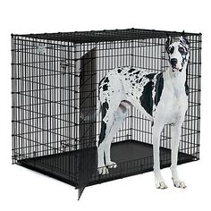 MidWest Solutions 2 Door Large Dog Crate - http://www.thepuppy.org/midwest-solutions-2-door-large-dog-crate/