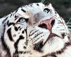 Zeus2 My Eyes, Art Photography, Lens, Animals, Fine Art Photography, Animales, Animaux, Klance, Animal