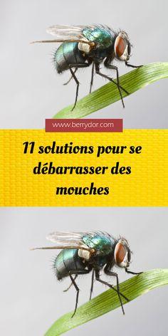 11 solutions pour se débarrasser des mouches Solution, Home Crafts, Insects, Health, Wood Working, Decor Ideas, Decorations, Crochet, Garden