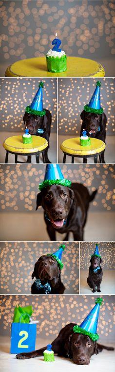 doggie birthday +