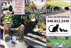 COURTESY SHARE for Culpeper Felines & Friends (Virginia) on 6/11/15: Do you take care of some community cats at your apartment complex? Or perhaps you have numerous barn cats on your farm? Maybe you stop by that fast food restaurant in town every day to feed the cats who live by the dumpsters? Culpeper Feline & Friends wants to spay/neuter and vaccinate these cats! Please contact Phyllis at 571.221.4442 for more information. Remember if you FEED them, FIX them, and it is FREE! #TNR 