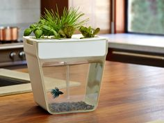 Self-cleaning fish tank that grows food from fish waste.  Fintabulous!!!...