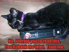 Always trust the cat.  Image detail for -Anti-Twilight Kitty - Harry Potter Vs. Twilight Photo (9511347 ...