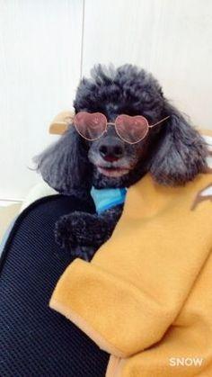 重黒木理容室の看板犬バロンちゃんにはコレが反応しました(oo) 可愛く撮れました tags[宮崎県]