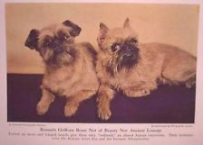 1944 Dog Art, Natl Geo Brussels Griffon Kodachrome