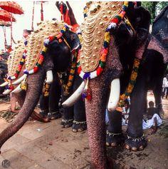 Thrissur Pooram Festival #Kerala