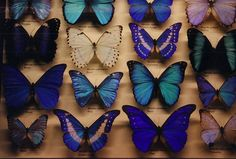 i want to make a faux one of these. (butterflies to too pretty to kill).